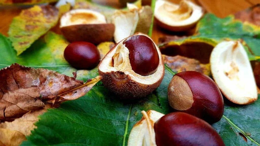 chestnut 3734987 1280