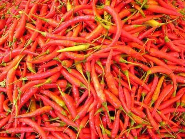 chilli pepper 449 640 1