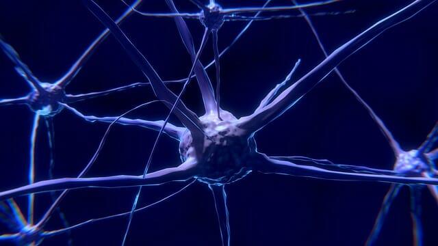 Neuron, Nervenzelle